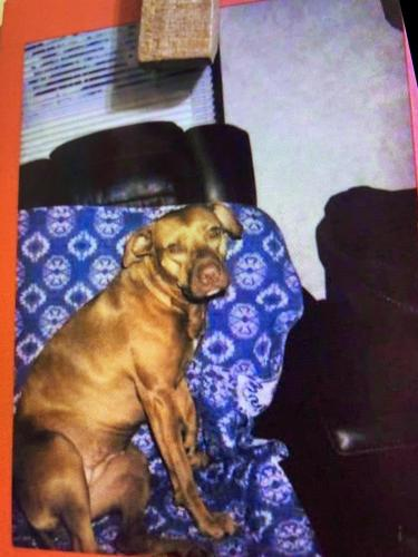Lost Female Dog last seen Pine mount and 90, Lake City, FL 32024