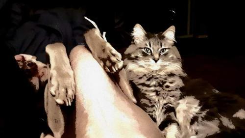 Lost Male Cat last seen Erin Mount CRESCENT SE, Calgary, AB T2B 2T1