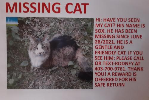 Lost Male Cat last seen Forest lawn area SE, Calgary, AB