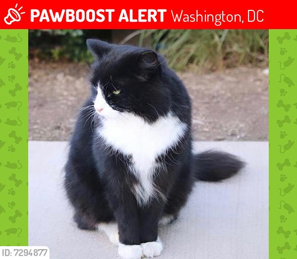 Lost Female Cat last seen Near Massachusetts Avenue Washington,D.C., Washington, DC 20016