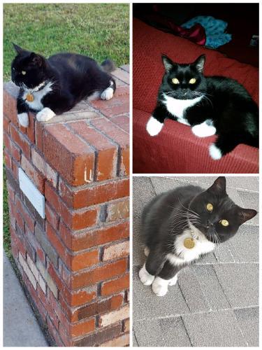 Lost Female Cat last seen Scottsdale Rd and McDowell, Scottsdale, AZ 85257