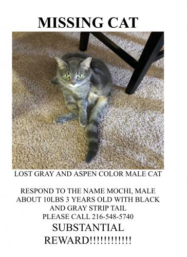 Lost Male Cat last seen York road and pleasant lake blvd , Parma, OH 44130