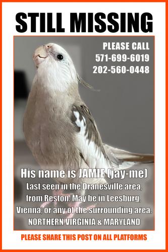 Lost Male Bird last seen Dranesville Rd, Herndon, VA 20170