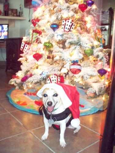 Lost Female Dog last seen Beechwood Lane, Palm Coast, FL 32137