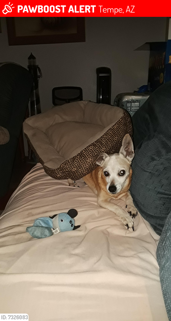 Lost Male Dog last seen 72nd Place and Roosevelt, Tempe, AZ 85281