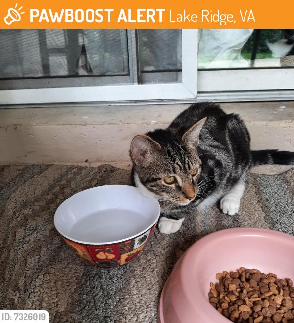 Found/Stray Male Cat last seen Antietam , Lake Ridge, VA 22192