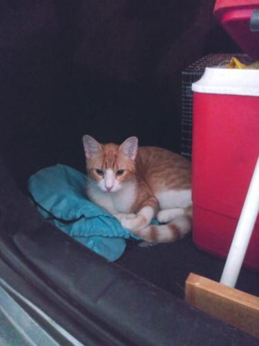 Lost Male Cat last seen Pratt Street and Winnemessett Avenue, DeLand, FL 32720