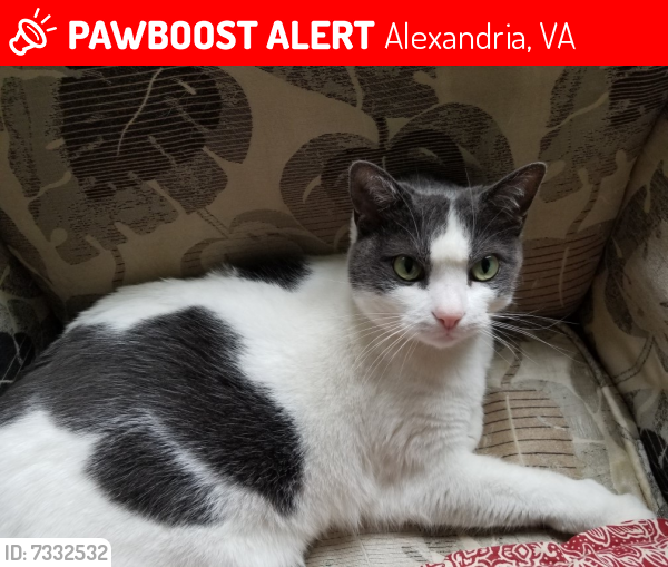Lost Female Cat last seen Near the playground / basketball courts on Bedrock Rd. across from Westfield Ct., Alexandria, VA 22306