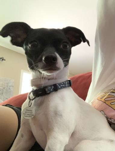 Lost Male Dog last seen Snyder and kolb- above rural metro , Tucson, AZ 85750