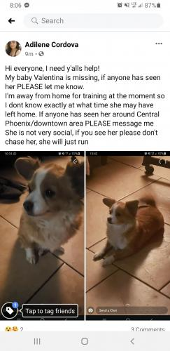Lost Female Dog last seen 15th Ave and van buren, Phoenix, AZ 85007