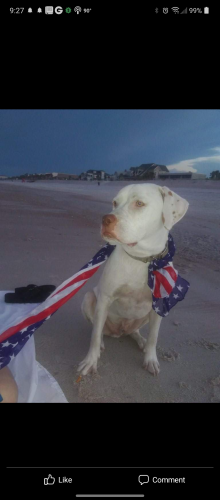 Lost Male Dog last seen between Mitchell and 215 on river rd, Live Oak, FL 32060