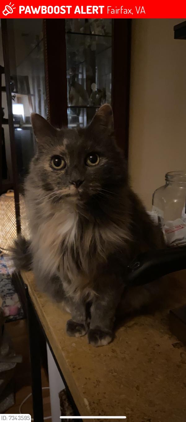 Lost Female Cat last seen Near Country Hill Drive, Fairfax, VA 22030