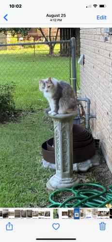 Lost Female Cat last seen Holiday Gardens, Lafayette, LA 70508