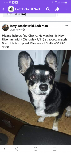 Lost Male Dog last seen Behind. Daisy Mountain fire dept #141, New River, AZ 85087
