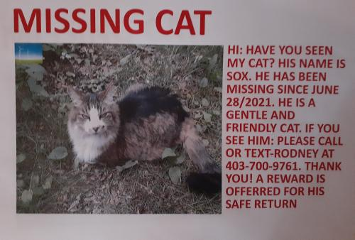 Lost Male Cat last seen Forest lawn 26 ST SE- Calgary , Calgary, AB T2B