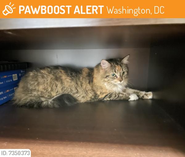 Rehomed Female Cat last seen Near Connecticut Avenue NW, Washington, DC 20008