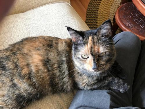 Lost Female Cat last seen 14th st , Calgary, AB T2N 1H1