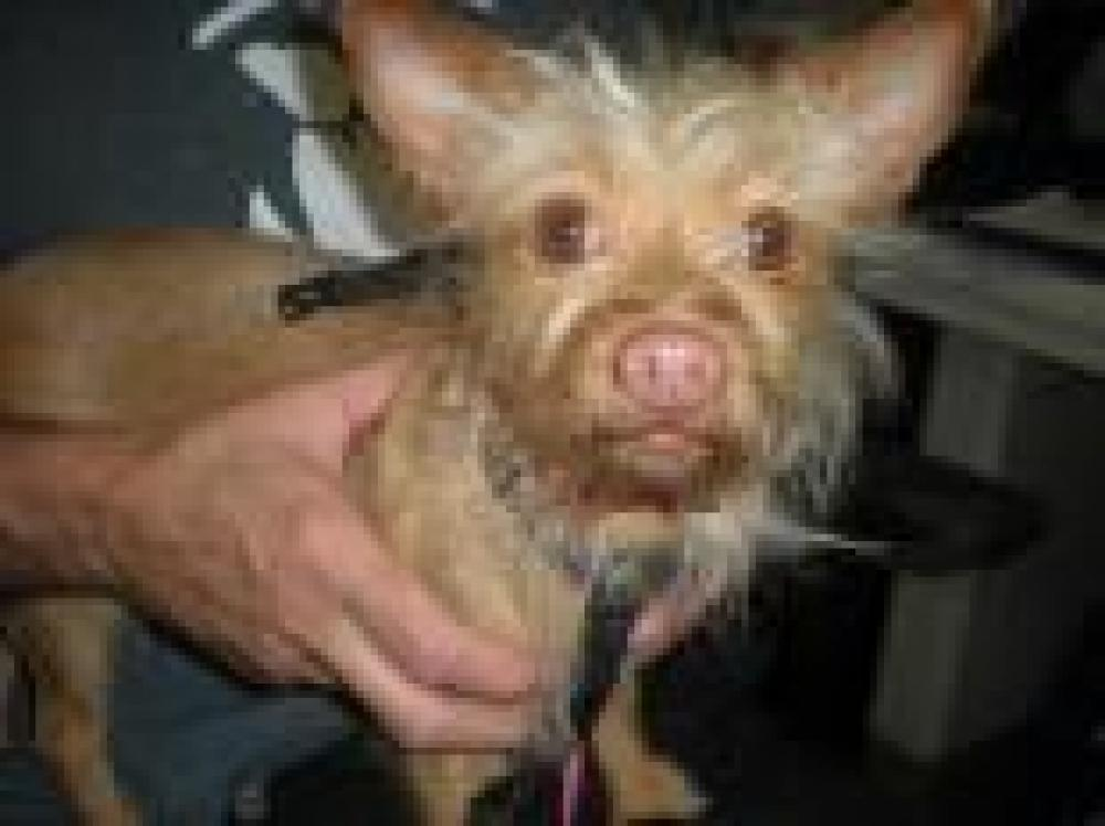 Shelter Stray Female Dog last seen Belle Haven, VA 22307, Fairfax, VA 22032