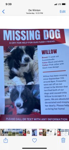 Lost Female Dog last seen MacLeod Trail, De Winton, AB T0L 0X0