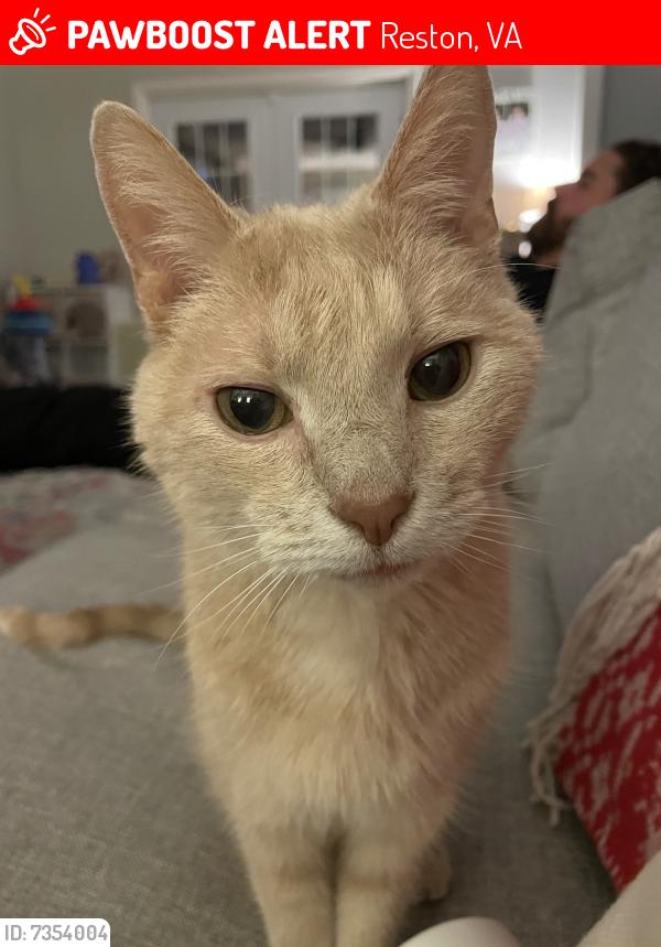 Lost Male Cat last seen Drop Forge Ln and Lawyers rd , Reston, VA 20191