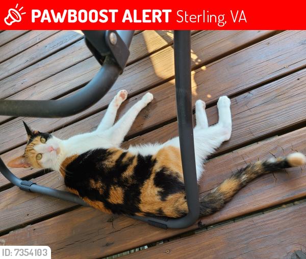 Lost Female Cat last seen Cascades Parkway, Sterling, VA 20166