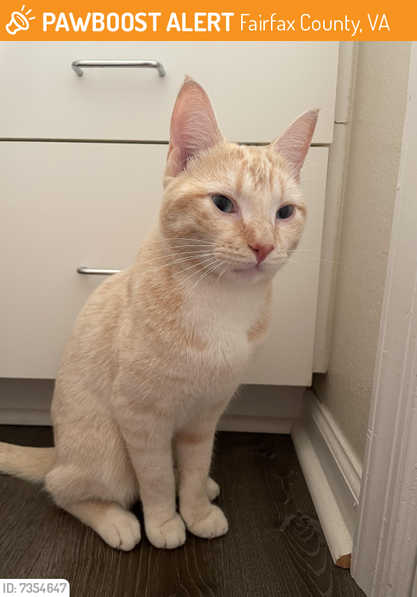 Found/Stray Male Cat last seen Finley at Fairfax apmts, Fairfax County, VA 22030