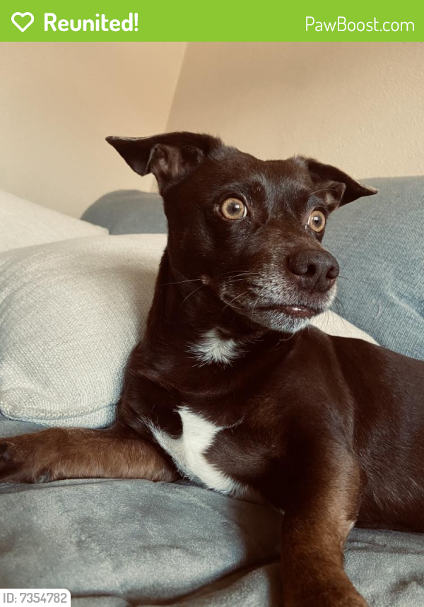 Reunited Male Dog last seen Juliet / 22nd st. , Los Angeles, CA 90007