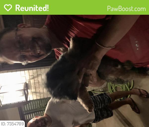 Reunited Male Dog last seen Corona & Inverness, La Cañada Flintridge, CA 91011