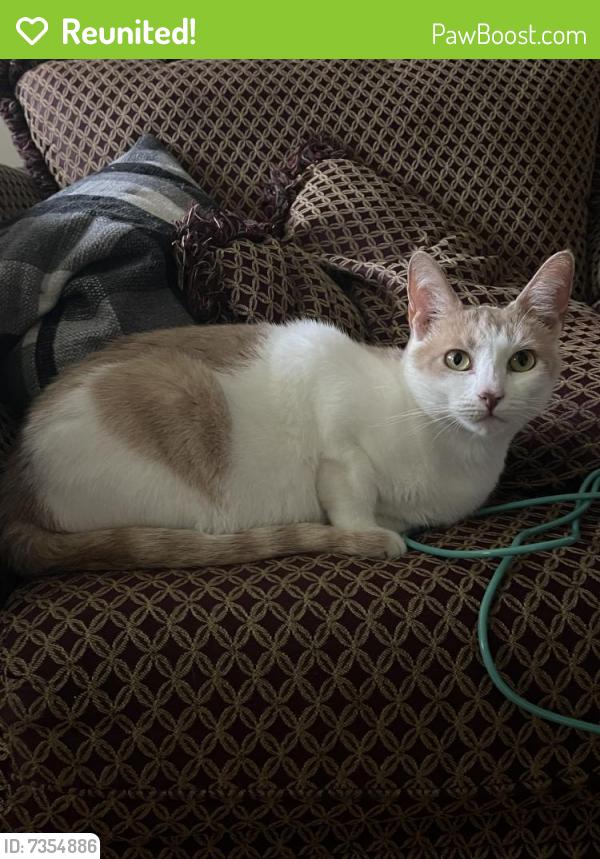 Reunited Female Cat last seen Ingles on Main Street, Anderson, SC 29621