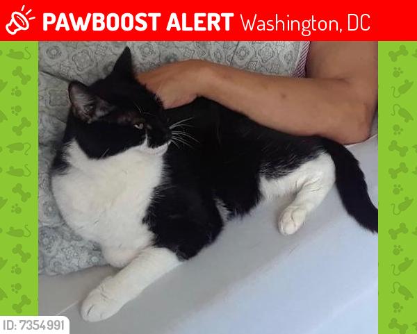 Lost Female Cat last seen Lafayette Elementary School, Washington, DC 20008