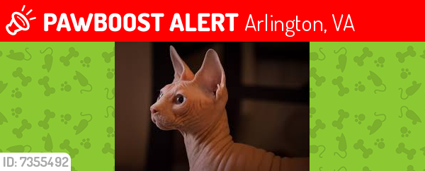 Deceased Female Cat last seen Roosevelt Street b/t 26th and 27th, Arlington, VA 22205