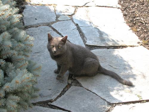 Found/Stray Male Cat last seen Near West Brighton Avenue Sterling VA, Sterling, VA 20164