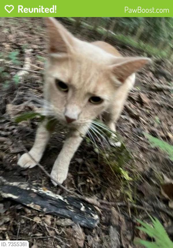 Reunited Male Cat last seen South Lakes Dr. and Soapstone Dr. Reston, VA , Reston, VA 20191