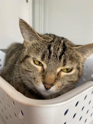 Lost Female Cat last seen Near E Glebe Road, Alexandria, VA 22305