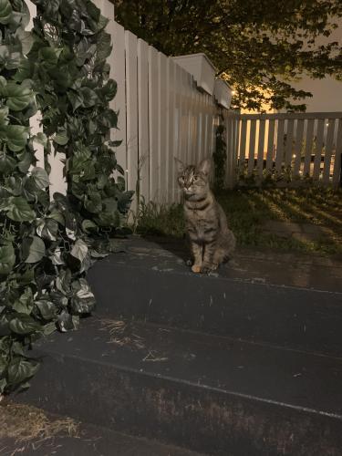 Found/Stray Unknown Cat last seen Holbrook , Washington, DC 20002