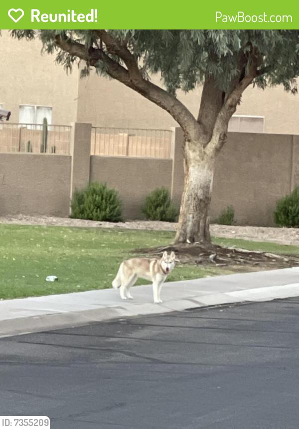 Reunited Unknown Dog last seen Amberwood , Phoenix, AZ 85045