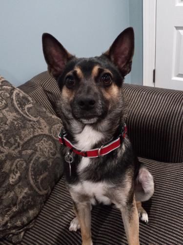 Lost Male Dog last seen Near Tucker rd Fort Washington 20744, Fort Washington, MD 20744