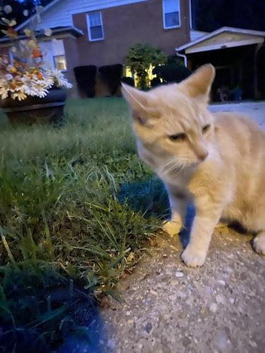 Found/Stray Unknown Cat last seen Brierly Road near Audubon Sanctuary , Chevy Chase, MD 20815