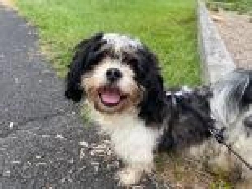 Shelter Stray Male Dog last seen Herndon, VA 20170, Fairfax, VA 22032