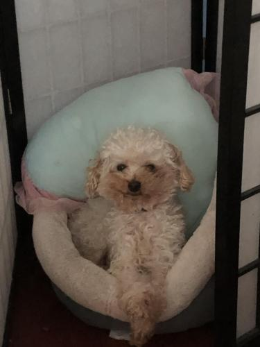 Lost Male Dog last seen Near Sudley Rd, Manassas, VA, Manassas, VA 20109