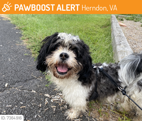 Rehomed Unknown Dog last seen Sugarland valley dr, Herndon, VA 20170