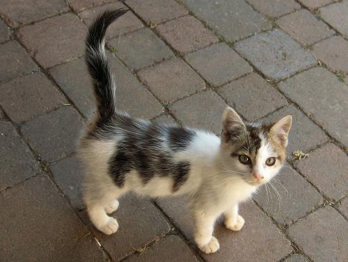 Lost Unknown Cat last seen Near Citadel rd Hampton Inn, Orangeburg, SC 29118