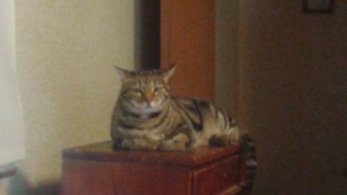 Lost Female Cat last seen Clagett and Crawford, Rockville, MD 20851