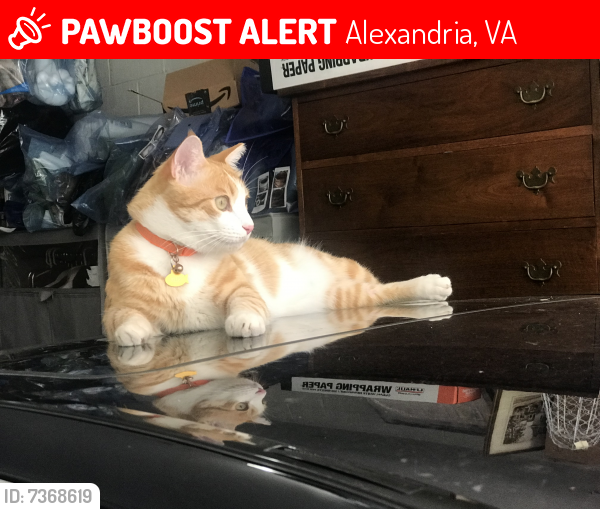 Lost Male Cat last seen Masonic Temple, Virginia Water Company, Alexandria, VA 22310