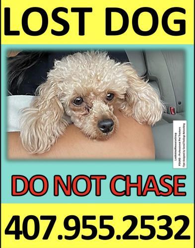 Lost Female Dog last seen Lee St & Old Burke Lake Road , Burke, VA 22015