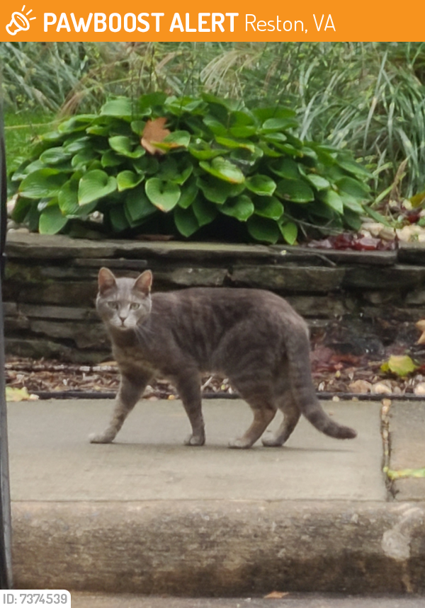 Found/Stray Unknown Cat last seen Generation and Glade Dr., Reston, VA 20191