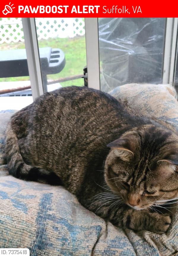 Lost Male Cat last seen Near Shepherd ST, Suffolk, VA, Suffolk, VA 23434