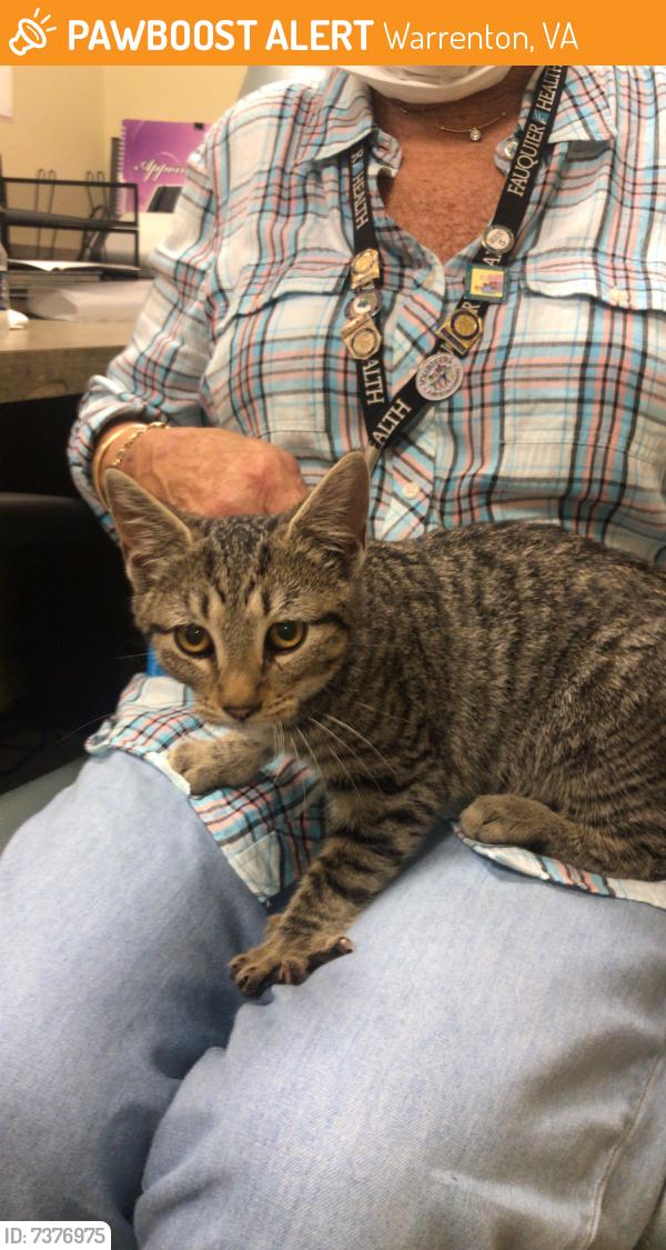 Rehomed Female Cat last seen Near Suffield Lane Warrenton Virginia 20187, Warrenton, VA 20187