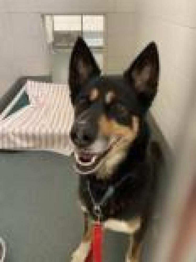 Shelter Stray Male Dog last seen Alexandria, VA 22310, Fairfax, VA 22032