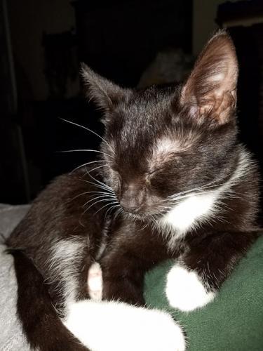 Lost Female Cat last seen near Mid County Veterinarian Clinic in La Plata , La Plata, MD 20646